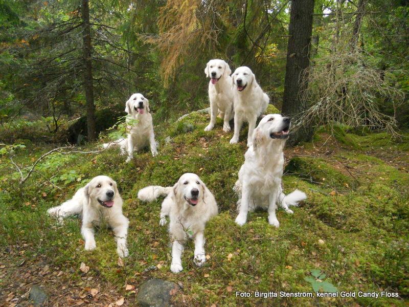 Hundpromenad med hundvänner